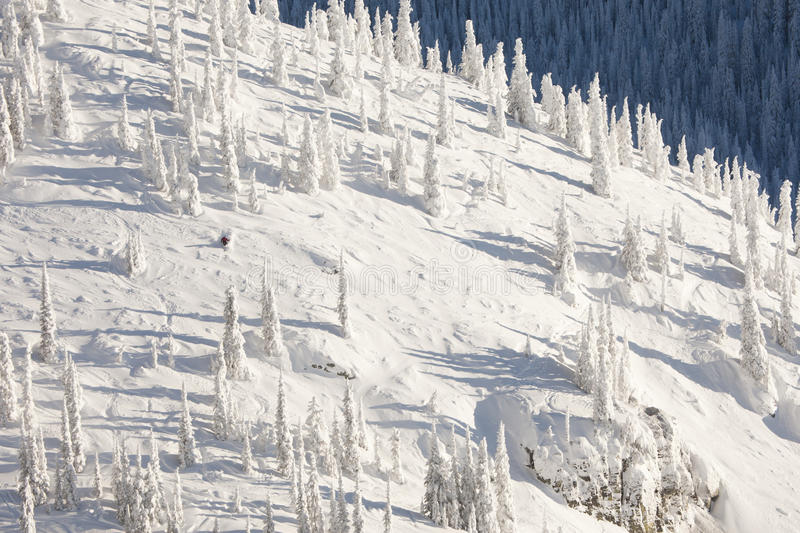 Snow Covered Mountainside. Single skier on a snow covered mountainside with tracks running down the slope. The trees lining the mountain are also covered in snow royalty free stock photography