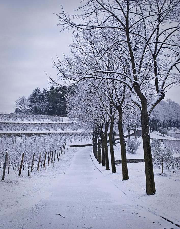 Snow Covered Path Stock Photography