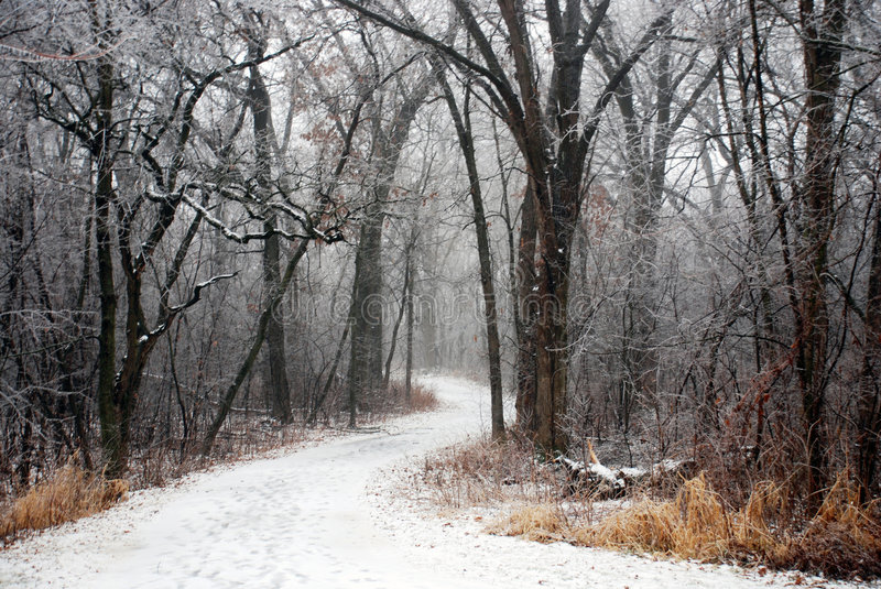 Snow Covered Path. Winding through the trees royalty free stock photography
