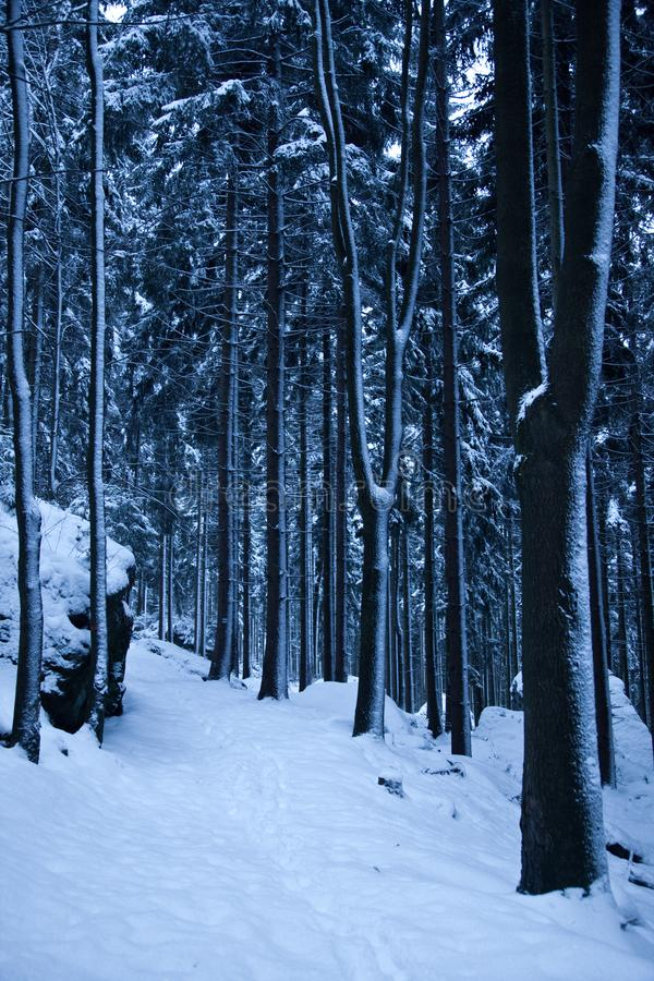 A snow covered path in a dark forest stock images