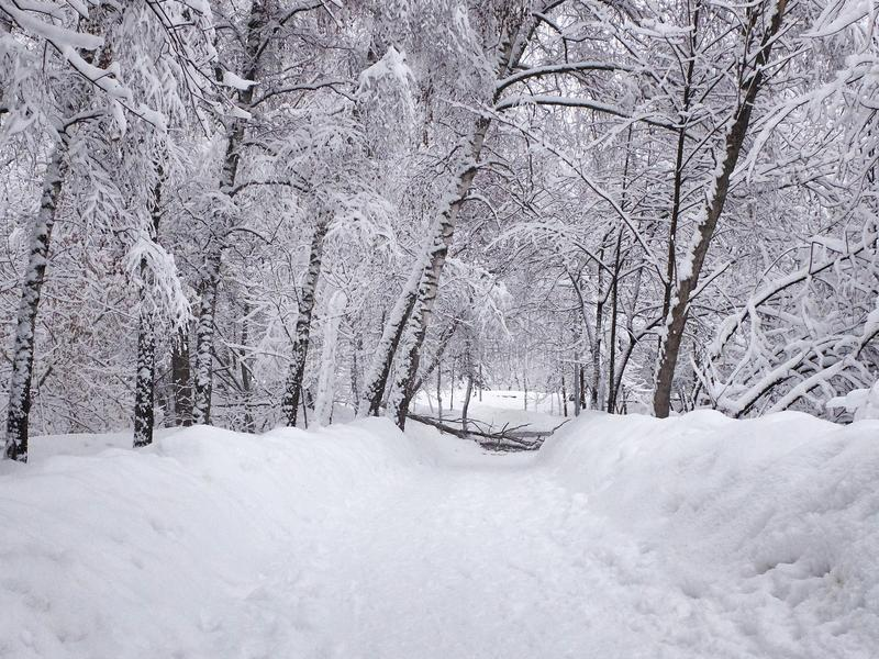 Snow-covered path, stuck snow on the trees and broken fallen tree branches. Park in the snowy wintertime stock image