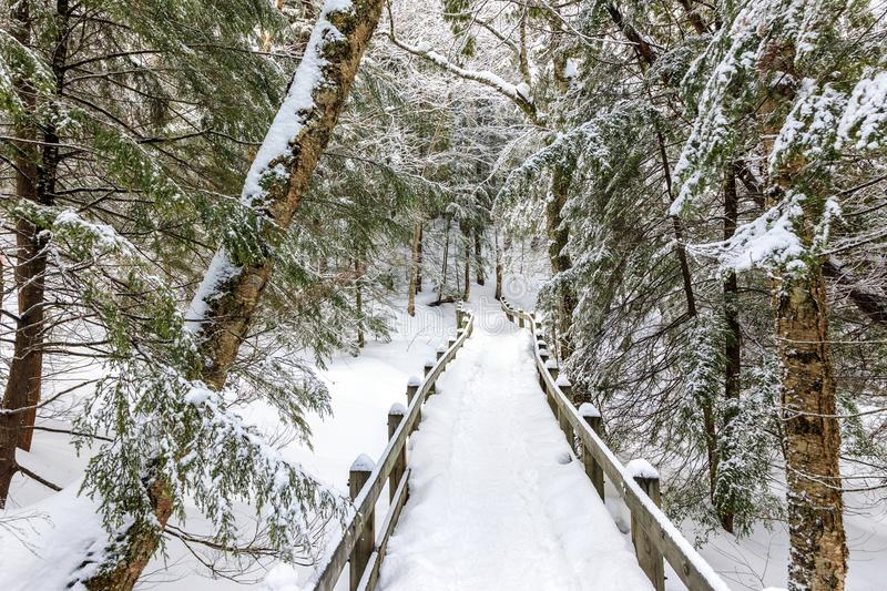 Winter Wonderland Path. Snow covered path to Wagner Falls in the Upper Peninsula of Michigan. Snow covers the branches of fir and pine trees, as well as the royalty free stock image