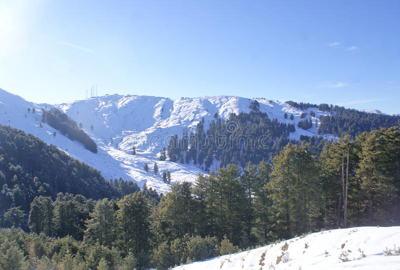 Download The Snow Covered Peaks Of Himalayas At Patnitop With Pine Forests. Stock Photo - Image: 42301626