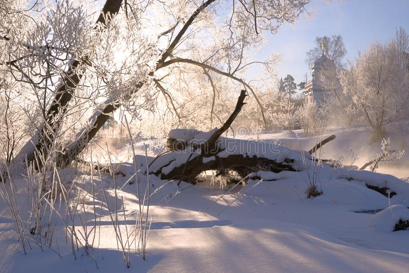 Snow-covered picturesque windbreak royalty free stock images