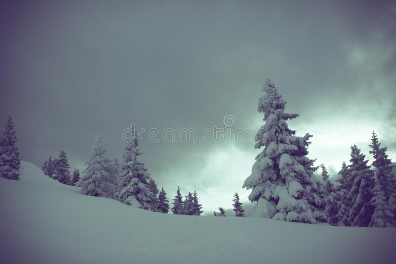 Snow Covered Pine Trees Under Cloudy Skies Free Public Domain Cc0 Image