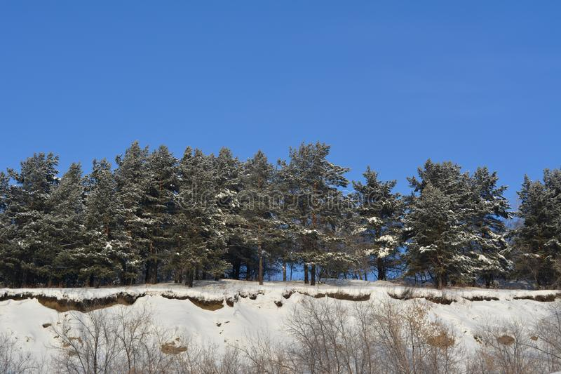 Snow covered pine trees. Winter forest on the mountain stock photography