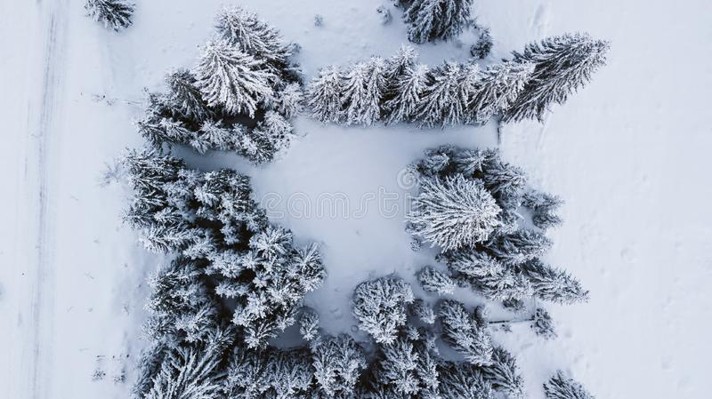 Snow-covered pines on top of the mountain, photographed from the air royalty free stock images