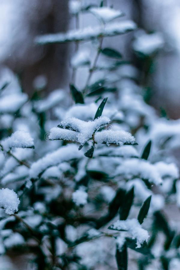Snow Covered Plant Free Public Domain Cc0 Image