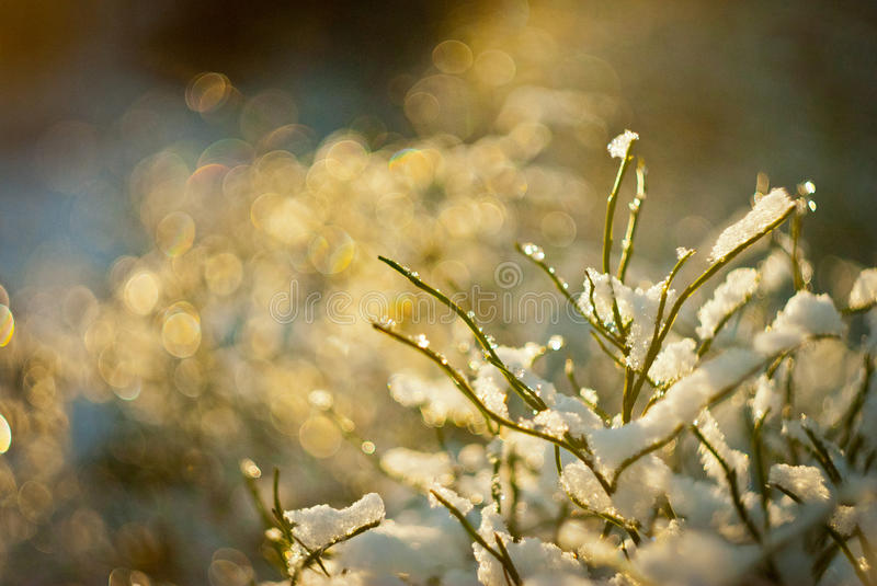 Snow-covered plants shine on the sun stock images