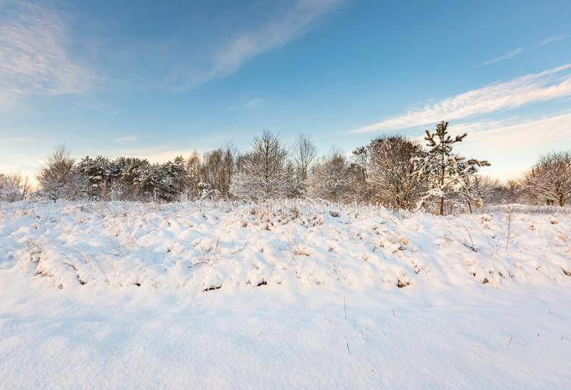 Snow covered polish landscape. Beautiful winter field and trees landscape. Snow covered polish landscape stock photo