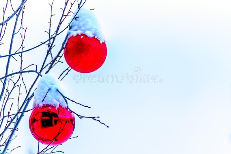 Snow covered Red Christmas Decorations hanging on tree branches of a tree. At Sun Peaks Ski Village royalty free stock photo
