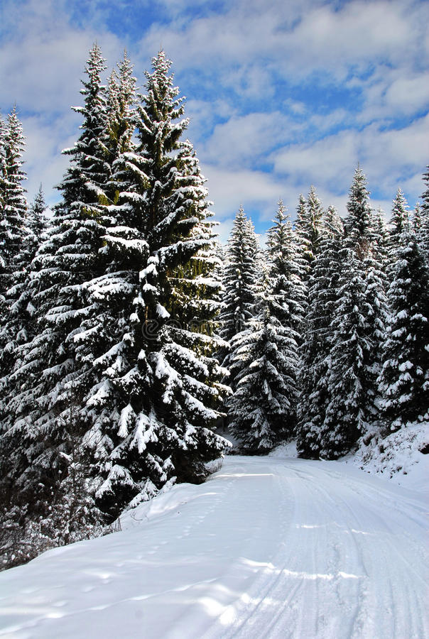 Download Snow covered road stock image. Image of ecology, rime - 23941013