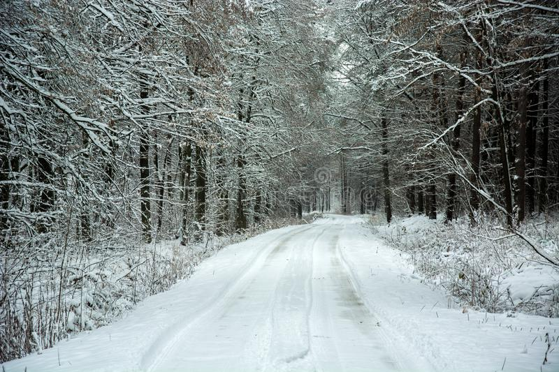 Snow-covered road through beauty mystical forest royalty free stock photos