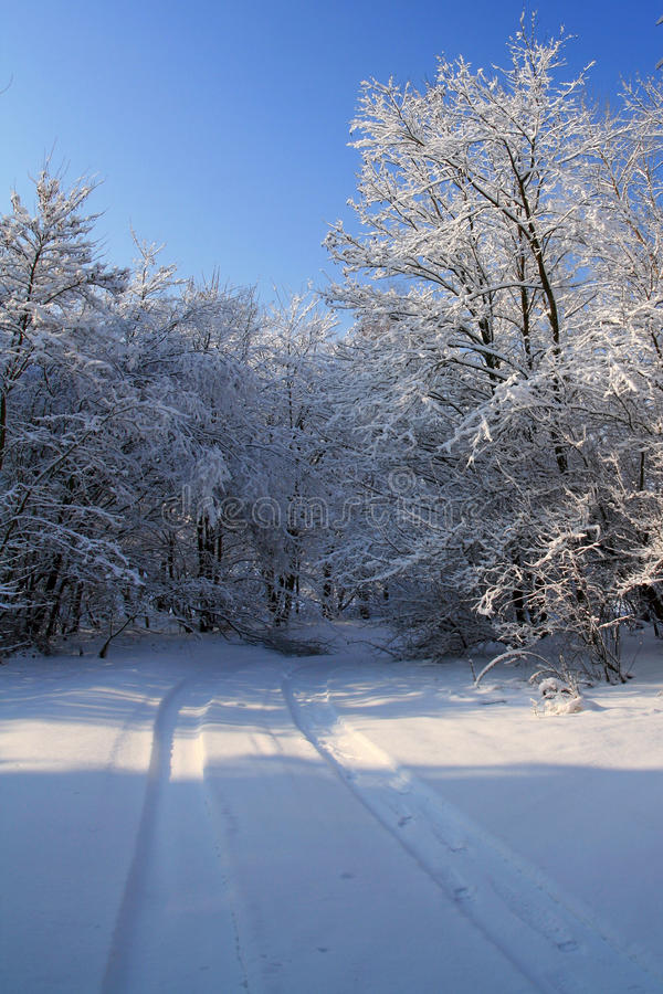 Snow-covered road in the forest stock image