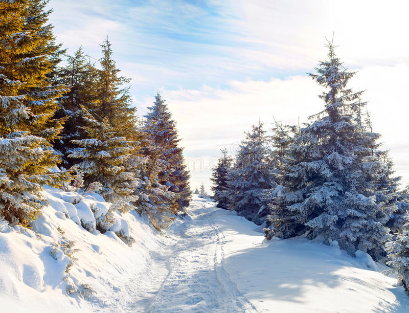 snow-covered road in the mountains, snow-covered trees, beautiful warm sunny day. Winter. Christmas landscape stock image