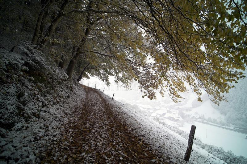 Snow Covered Road And Tree Free Public Domain Cc0 Image