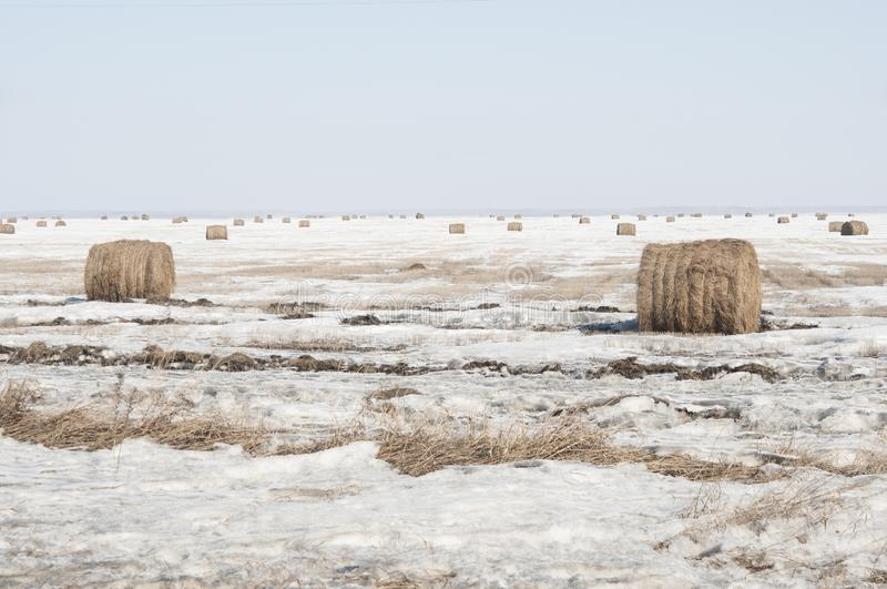 Snow covered round bale of hay in a farmers field stock photo