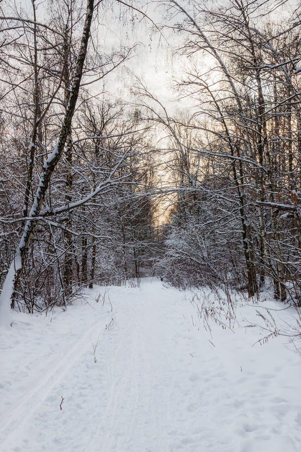Snow-covered steeg in het hout met zonsonderganghemel royalty-vrije stock foto's