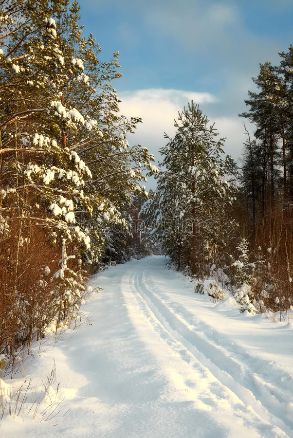 Snow-covered Straße, die im Winterholz verlässt lizenzfreies stockbild