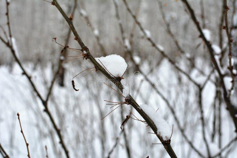 Snow-covered takken De winter bos Macrobomen en struiken De herfst Koud weer royalty-vrije stock foto