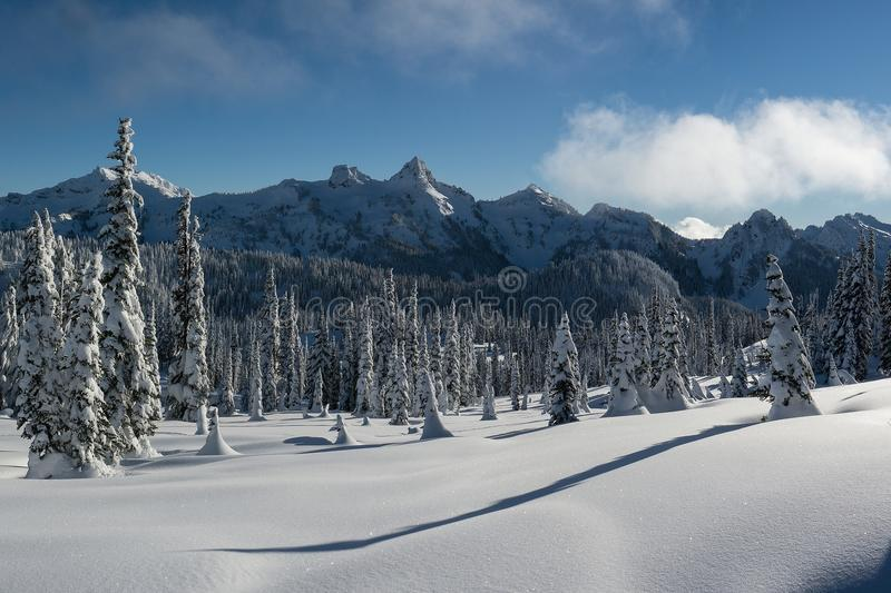 Wintry Tatoosh Mountains with Snow Covered Trees and Long Shadows royalty free stock image