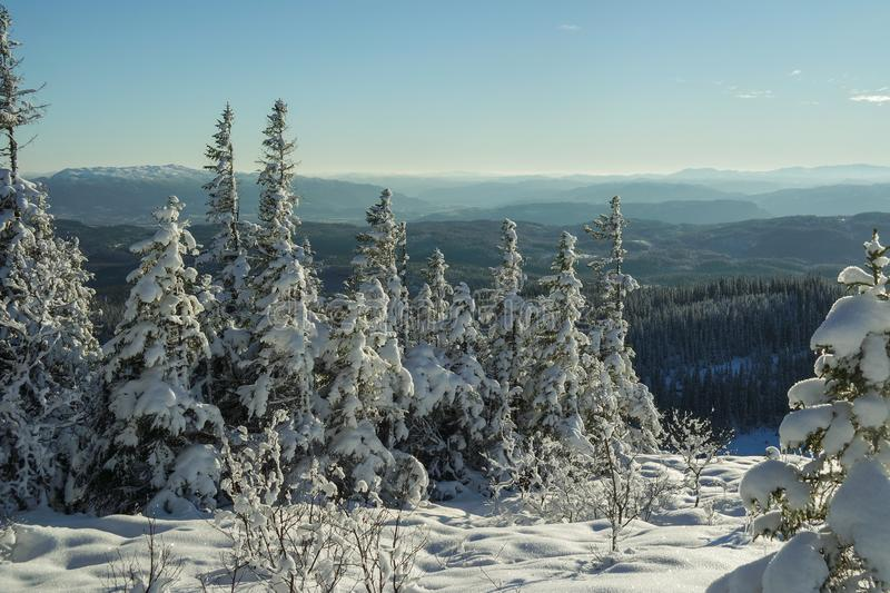 Snow covered three with Norwegian mountains in the back royalty free stock photo