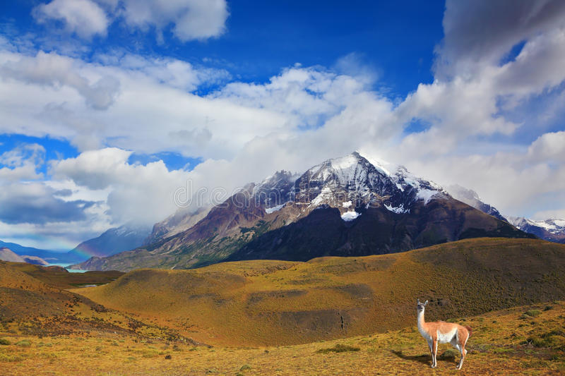 Snow-covered tops of the Andes stock images