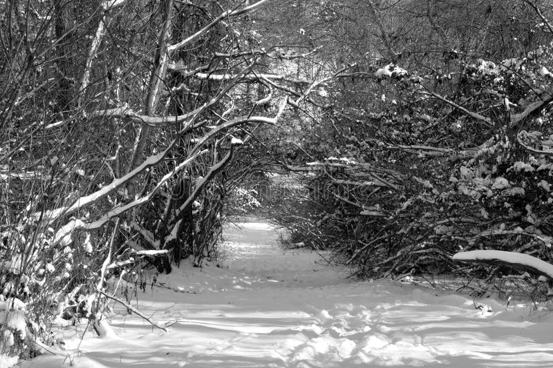 Snow covered trail royalty free stock images