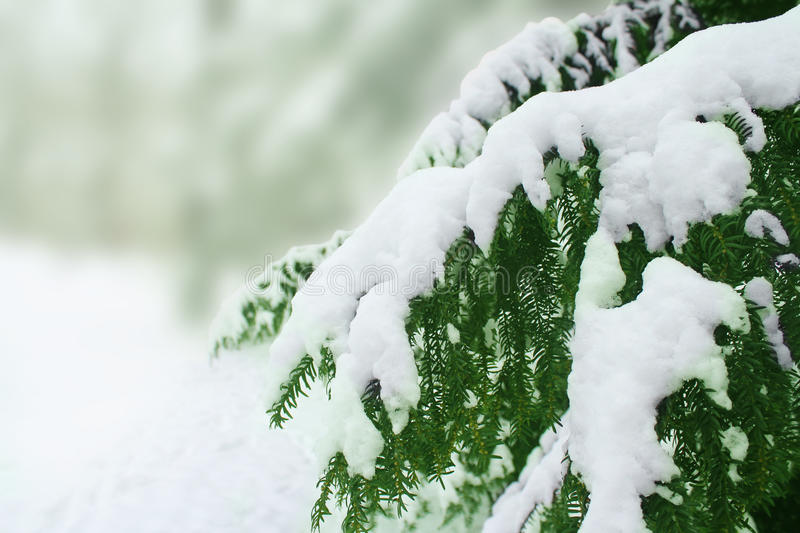 Snow covered tree. In germany stock photos