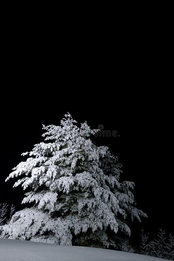 Snow-covered tree stock photos
