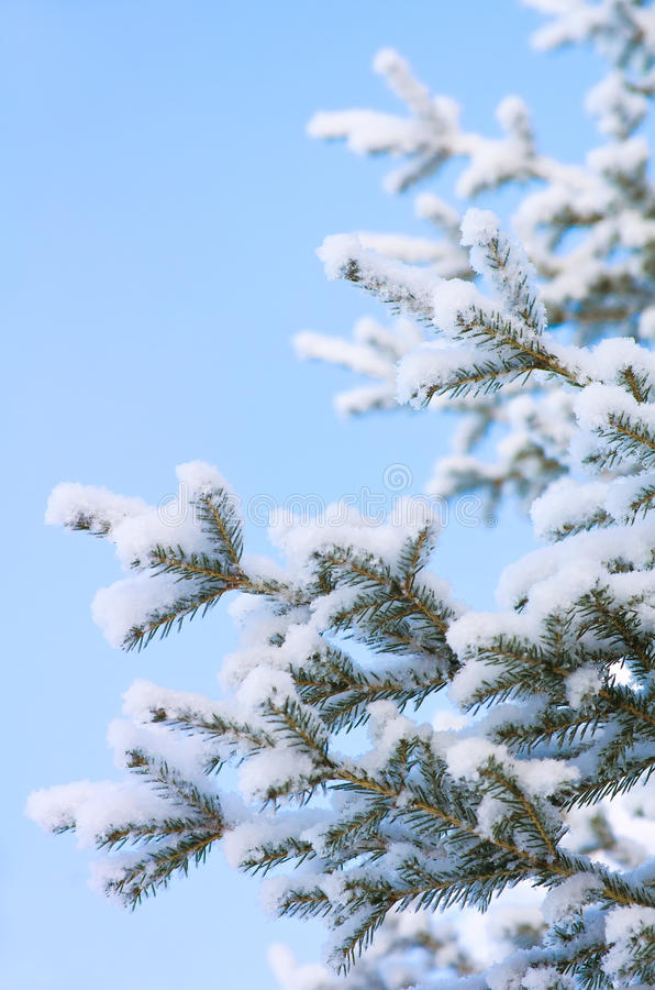 Snow-covered tree against a blue sky