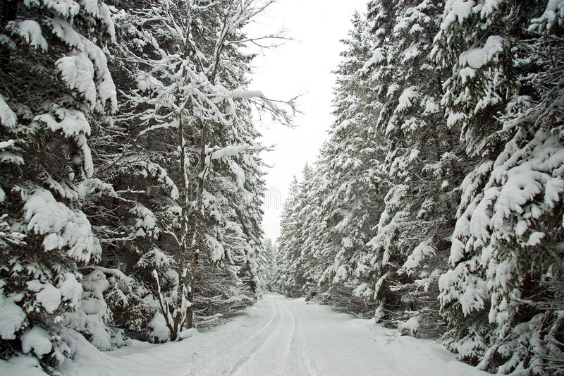 Snow Covered Tree Lined Road. A narrow snow covered seasonal road through a forest that is lined with evergreen trees that are also covered with snow. Shot in royalty free stock image