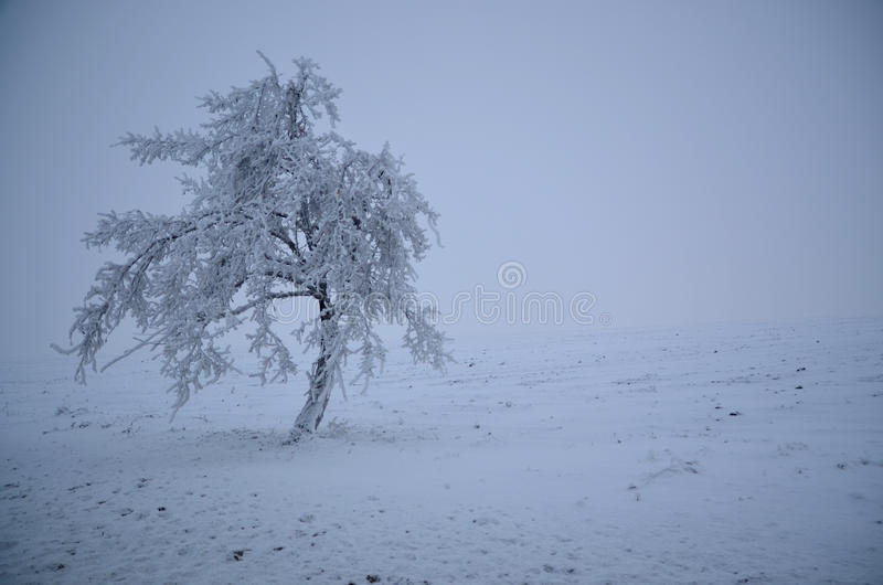 Blizzard Snow covered lone tree stock photography