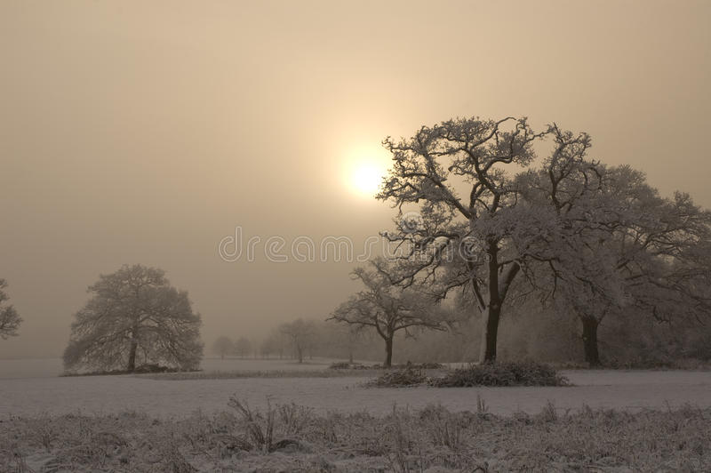 Snow covered tree with misty background