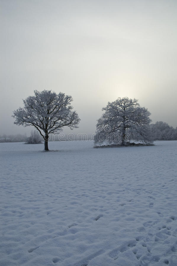Download Snow Covered Tree With Misty Background Stock Photo - Image: 33537702