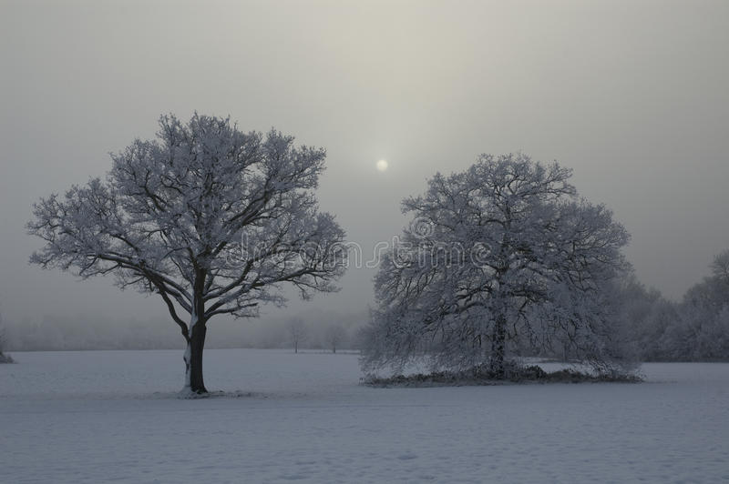 Download Snow Covered Tree With Misty Background Stock Image - Image: 33537705