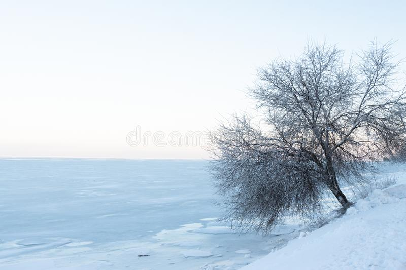 A snow-covered tree stands on the bank of a frozen sea in the snow royalty free stock photo