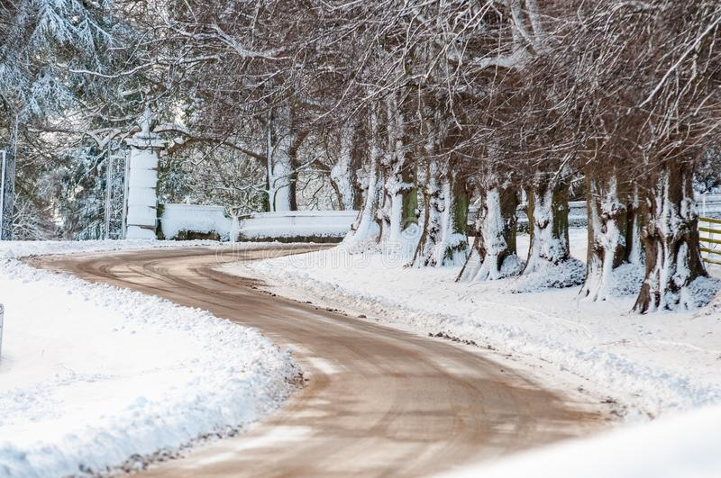Snow covered tree trunks lining an S shaped bend in a road.  royalty free stock photo