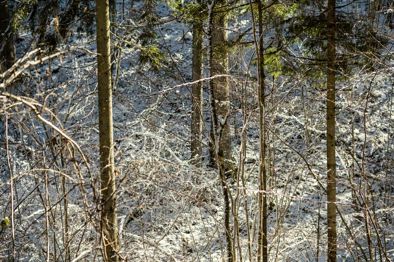 snow covered tree trunks and vegetation in abstract lush texture stock photos