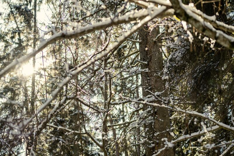 snow covered tree trunks and vegetation in abstract lush texture stock photo