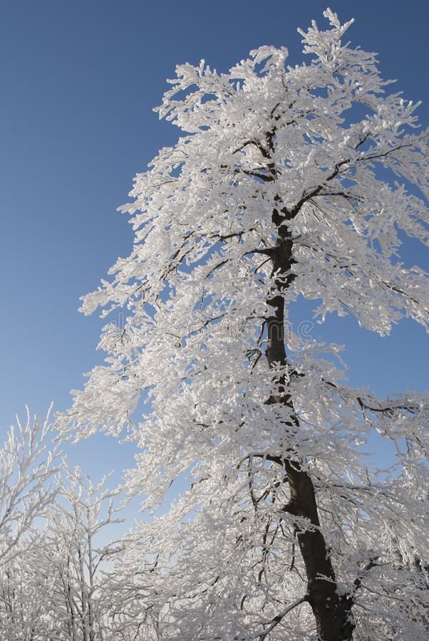 Snow Covered Tree Under Blue Cloudy Sky during Daytime stock photos