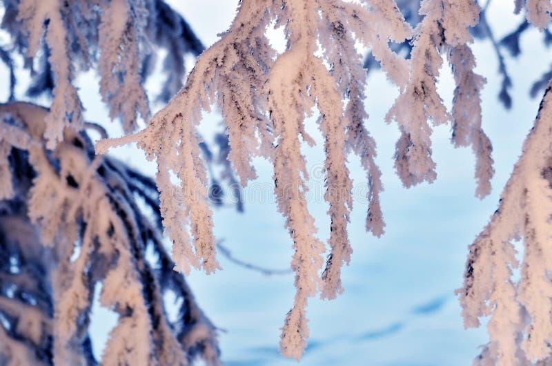 Snow-covered treefilial arkivbilder