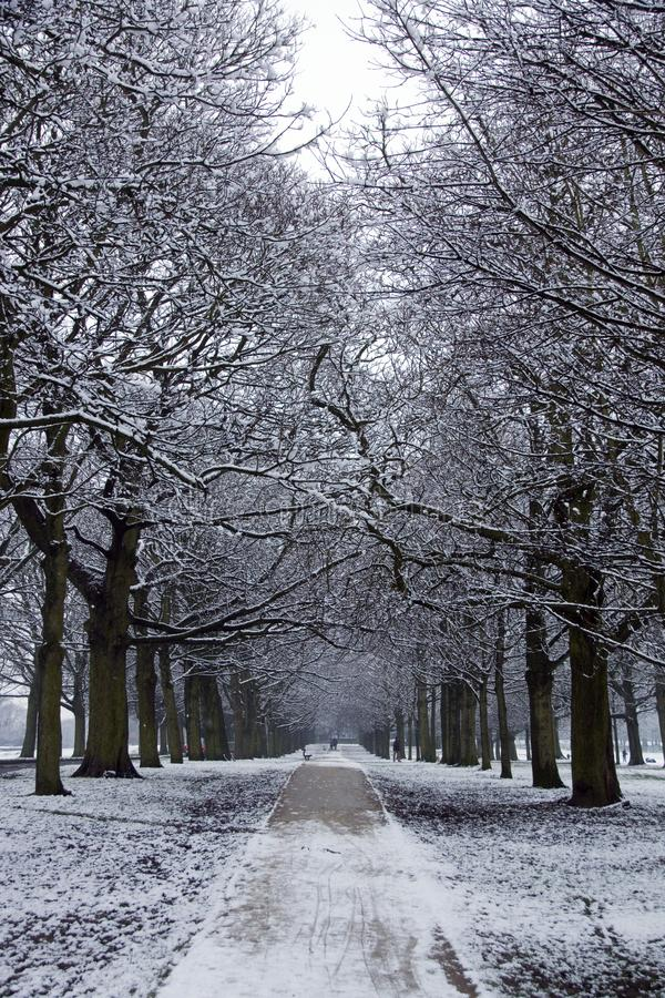 Free Snow Covered Trees Royalty Free Stock Photo - 106781265