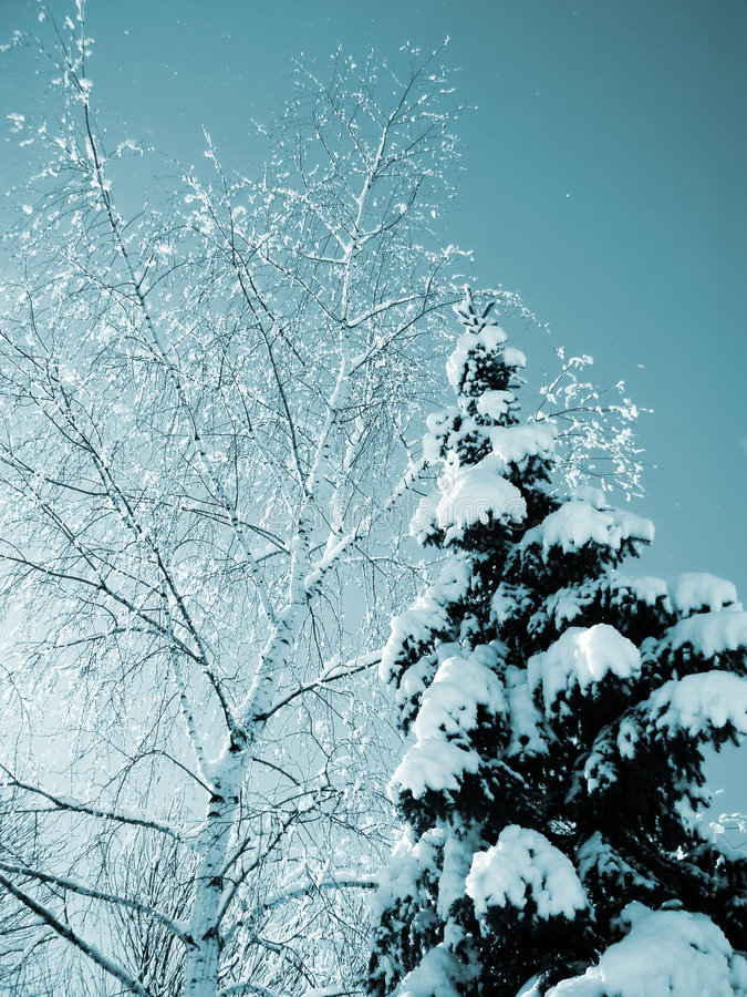 Snow-covered trees royalty free stock photography