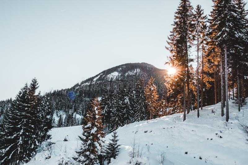 Snow Covered Trees Against Sky royalty free stock image