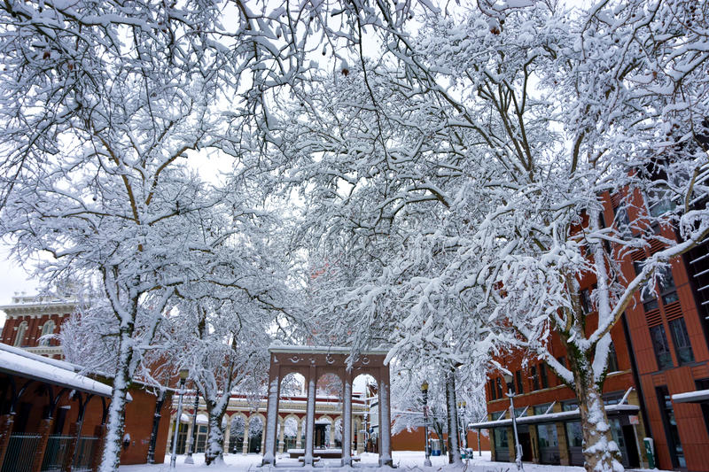 Snow Covered Trees in Ankeny Square. Ankeny Square in Portland, Oregon with huge snow covered trees looming above royalty free stock image