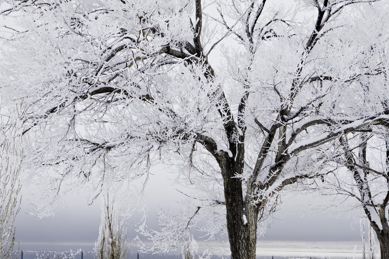Download Snow Covered Trees With Approaching Storm Royalty Free Stock Photo - Image: 12864695