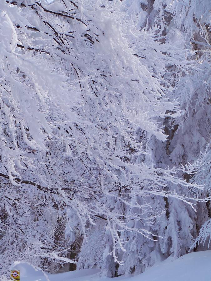Snow covered trees and branches. Winter cold ice stock photo