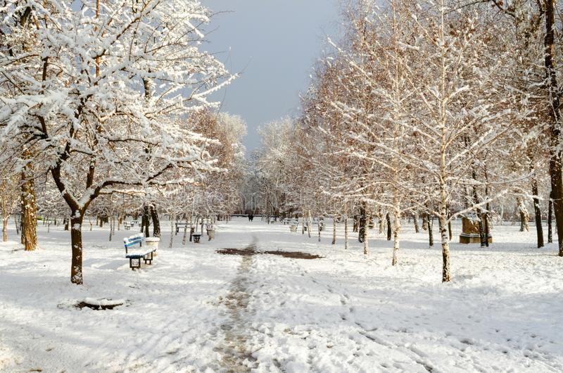 Snow-covered trees in the city park royalty free stock image