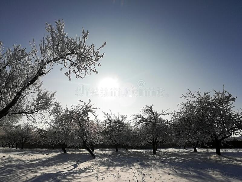 Snow covered trees on a clear sunny winter day.  royalty free stock photos